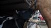 """Лошади, коровы и соя. Как используются """"дальневосточные гектары"""""""