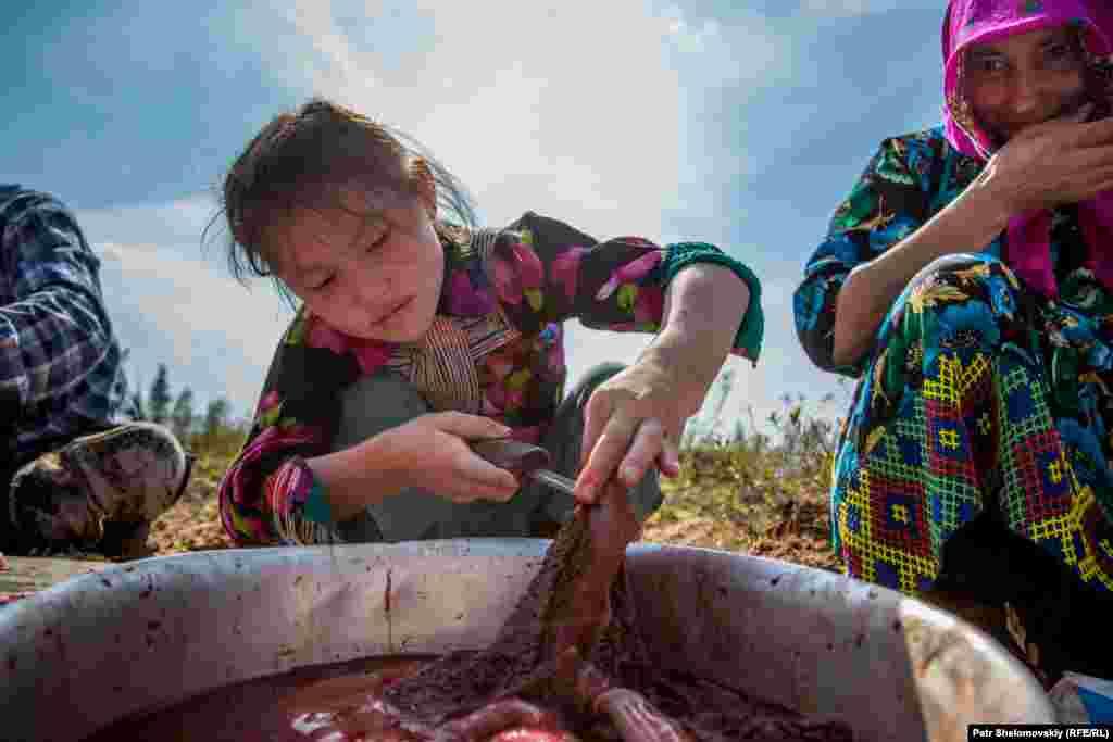 Девятилетняя Света отрезает кусок оленьего мяса. Его у хантов принято съедать сырым