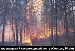 Фото: Красноярский лесопожарный центр