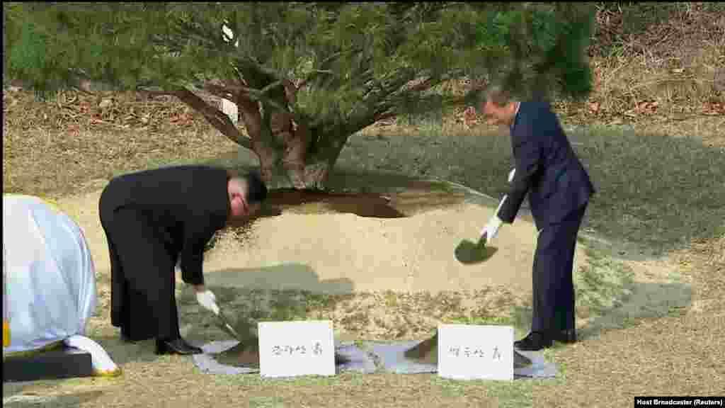 """Лидеры двух стран посадили сосну, которая впервые проросла в 1953 году, когда Сеул и Пхеньян подписали соглашение о перемирии во время Корейской войны. На памятной табличке, которая будет установлена рядом с деревом, будут слова: """"Здесь пустили корни Мир и Процветание"""""""
