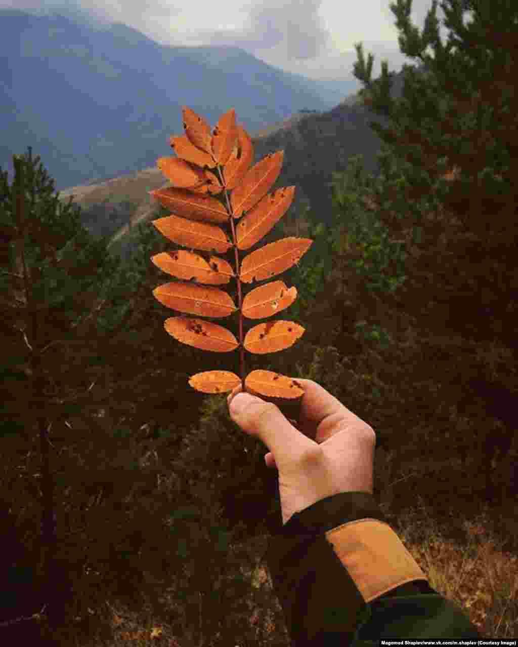 Шапиев говорит, что его любимое время года для фотографий природы – осень