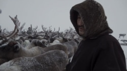 Russia's Vanishing Reindeer Herders: How A Native People Defy Change