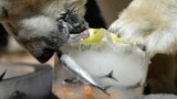 Как звери в зоопарках спасаются от жары