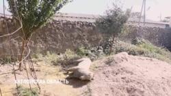 Таджикский кишлак объявил войну скульптуре козла