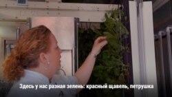 Огород на входе в ресторан: технологии помогают растить овощи в городе