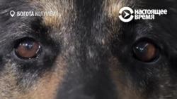 Собака Тень, за чью голову наркокартели назначили награду в $70 000