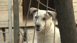 В Таджикистане приняли закон о защите животных от жестокого обращения