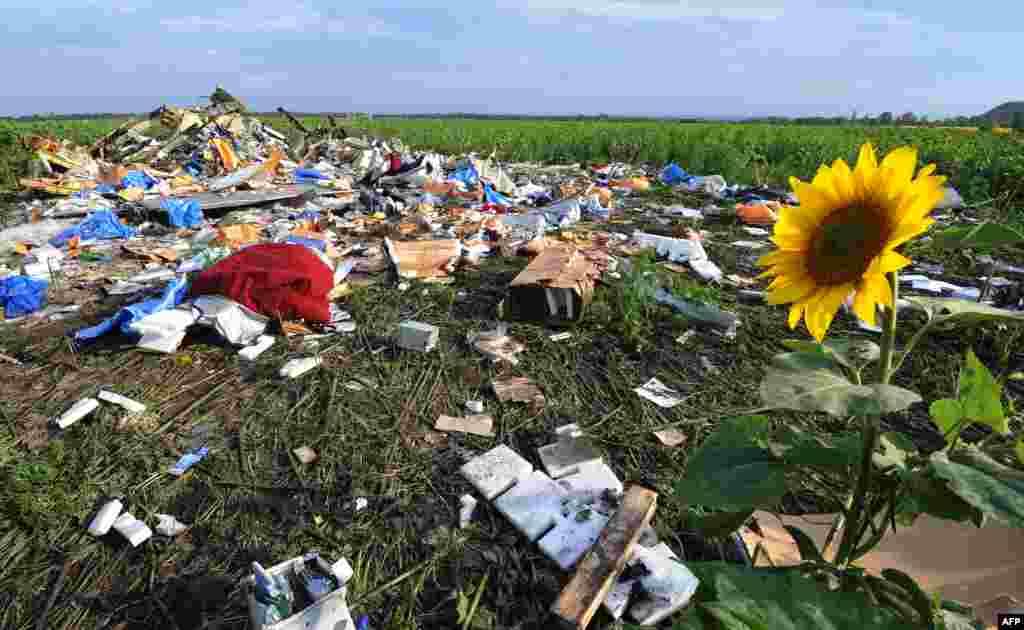 В честь годовщины австралийское издание Sydney Morning Herald разослало семьям погибших семена подсолнечника с места крушения лайнера, которые вырастили сами