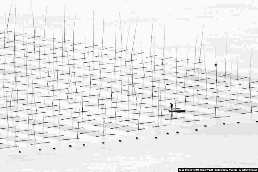 Китайский рыбный фермер среди бамбуковых удочек