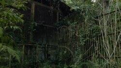 Сокровище Тарзана: жизнь ученых и обезьян в самоправозглашенной республике Абхазия