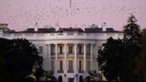 U.S. -- Birds fly over the White House at dusk, the day after a presidential election victory was called for former Vice President Joe Biden, in Washington, U.S., November 8, 2020.