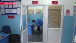 Чем обернется закрытие единственной государственной ветеринарной клиники в Таджикистане