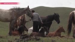 В Кыргызстане начался сезон кумыса. Как его пьют, и как им лечатся