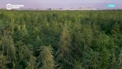 """В Кыргызстане предлагают смягчить наказание за """"некоммерческое"""" изготовление наркотиков"""