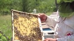 Пятое время года: от чего умирают молдавские пчелы