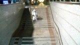 Азия: коронавирус подтвердили в Таджикистане