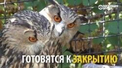 """Почему чиновники хотят закрыть крымский сафари-парк """"Тайган"""""""