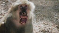 Детали: как смеются животные
