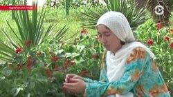 Азия: министры получили публичный выговор от Назарбаева
