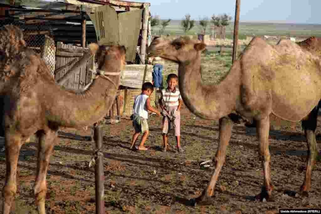 Бакытбек вместе с младшим братом играет рядом с загоном для верблюдиц.