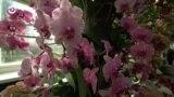Нью-Йорк, New York: шоу орхидей и маленькая карандашная лавка