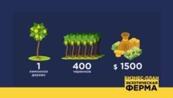 Бизнес-план: ферма экзотических растений