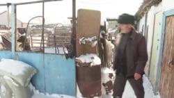 Как живут в Казахстане чеченцы и ингуши, депортированные с Кавказа в 1944 году