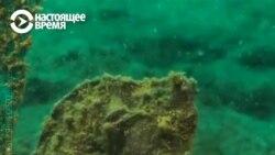 Как в Греции спасают морских коньков