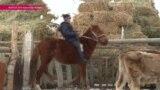 """""""Здесь есть волки и шакалы"""" - как живут фермеры в Нарынской области Кыргызстана"""