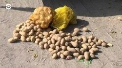 Азия: фермеры Кыргызстана терпят убытки