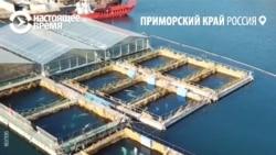 """Как спасали косаток из """"китовой тюрьмы"""" в Приморье"""