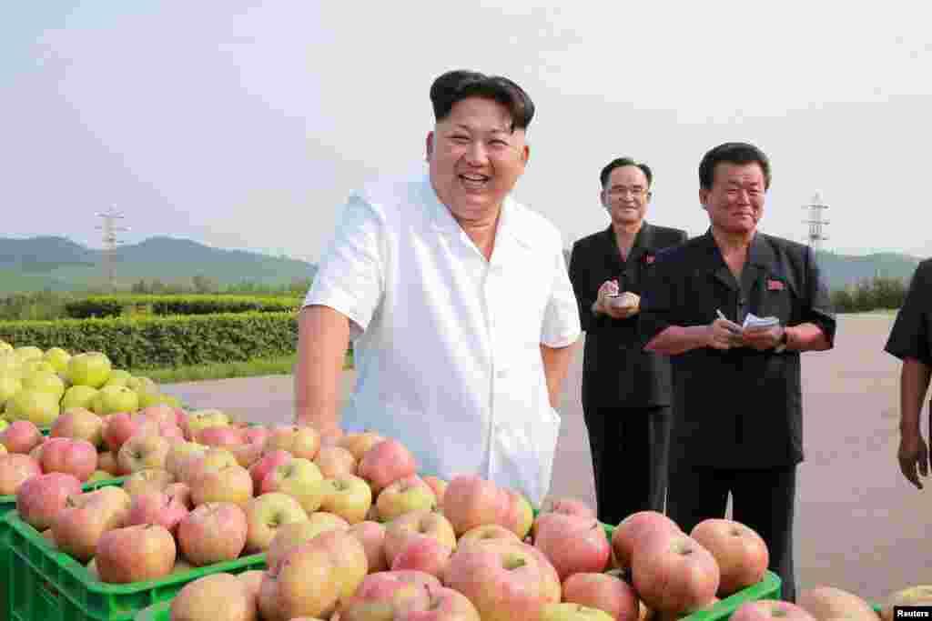 Севернокорейский президен Ким Чен Ын помогал своим согражданам собрать молодильные яблочки на одной из ферм, хотя по большей части только командовал