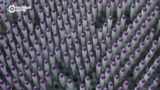 Неизвестная Россия: спички из Верхнего Ломова