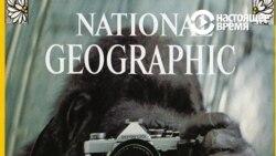 В США умерла горилла Коко, знавшая язык жестов. Чему она научила мир