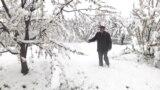 Апрельские снегопады уничтожили будущий урожай фруктов в Таджикистане