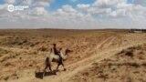 Человек на карте: табунщики верблюдов