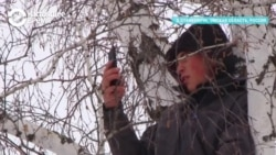 На березу за знаниями: студент из Омской области каждый день лезет на дерево