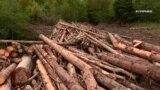 #ВУкраине: война за лес