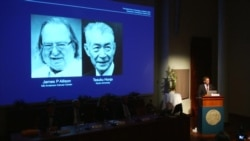 """""""Новая парадигма в лечении рака"""": за что дали Нобелевскую премию-2018 по медицине"""
