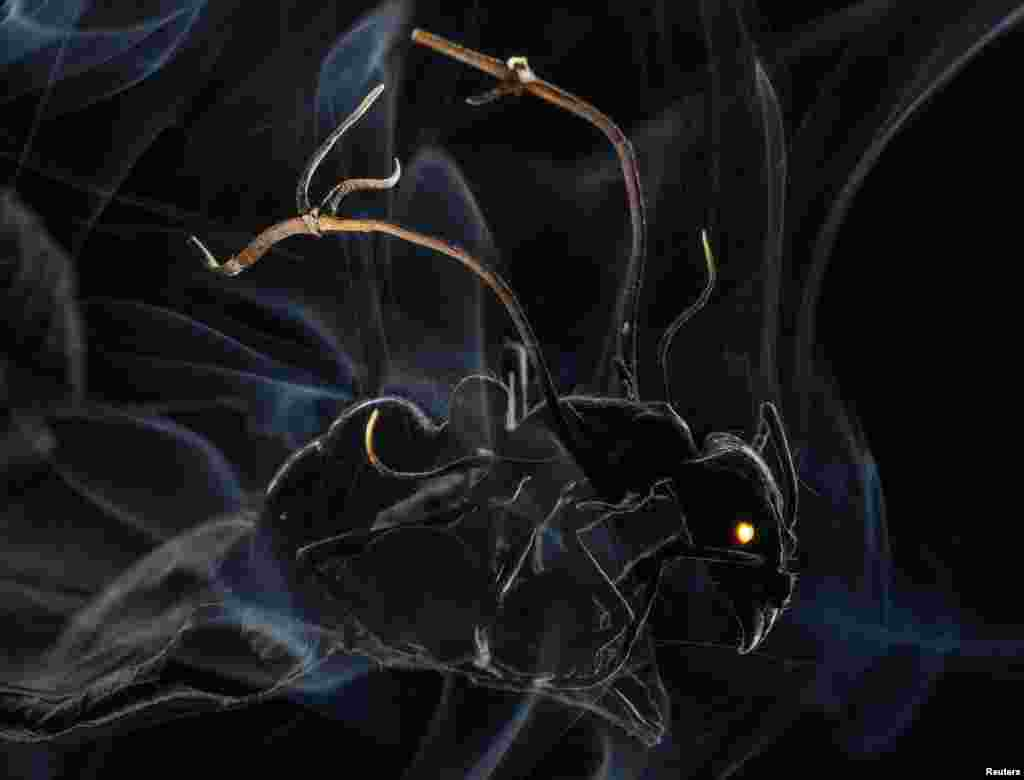 """Американский фотограф Ананд Варма (журналNational Geographic) получил первый призв категории """"Природа. Истории"""" - за серию снимков, на одном из которых - головья муравья, """"бомбардируемая"""" спорами грибка, которые парализуют его мозг."""