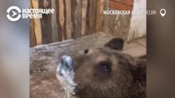 """""""Почему-то считается, что можно завести волка"""". С 2020 года держать в домах диких животных будет запрещено"""