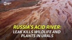 Russia's Acid River: Leak Kills Wildlife, Plants In Urals