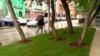 Как власти отреагировали на инициативу бизнесмена из Екатеринбурга, построившего газон за свой счет
