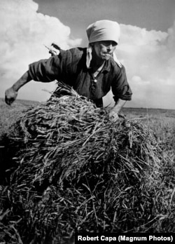 Robert Capa's iconic photo of a woman gathering a bundle of hay on a collective farm in the U.S.S.R.