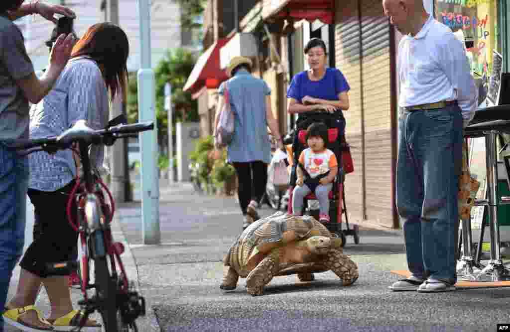 Для местных жителей Бон-чан - ежедневный повод, чтобы улыбаться и выходить на улицу