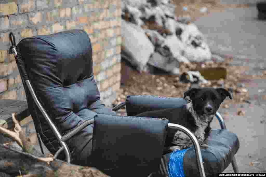 Пес, который живет на блокпосту при въезде в Авдеевку