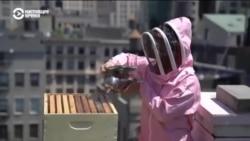 В пандемию ньюйоркцы начали разведить пчел на крышах высоток