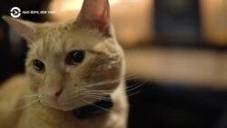 Нью-Йорк, New York: кот-метродотель с доставкой в номер