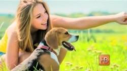 Преданней собаки нету существа