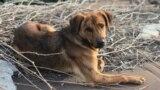 Молдова: кладбище бездомных животных